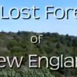The story of New England's ancient old growth forests
